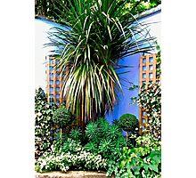 Small corner garden, Derry, Northern Ireland Photographic Print