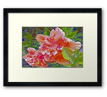 Newly trimmed hibiscus bush Framed Print