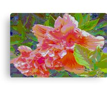 Newly trimmed hibiscus bush Canvas Print