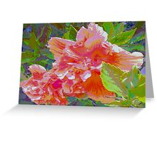Newly trimmed hibiscus bush Greeting Card