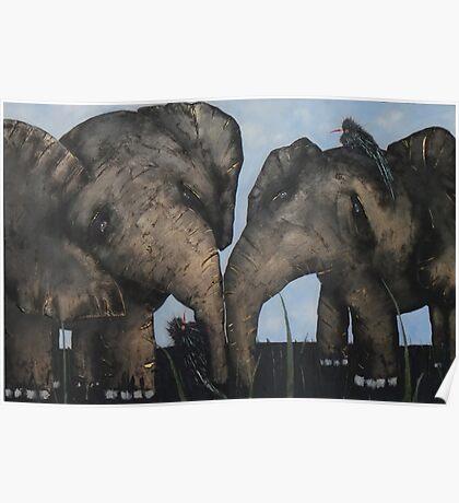 Wacky Birds on Baby Elephants Poster