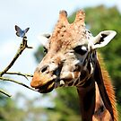 Just a Giraffe and a friend by shalisa