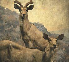 Gazelles by rentedochan