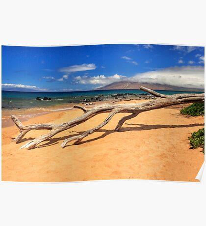 A Branch On Keawakapu Beach Poster