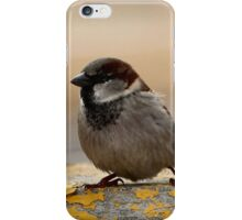 Hanging Out on the Corner... iPhone Case/Skin