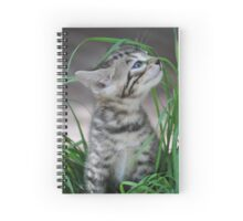 Kitten in the Grass Spiral Notebook
