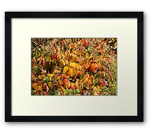 Autumn's Paint Brush Framed Print