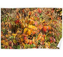 Autumn's Paint Brush Poster