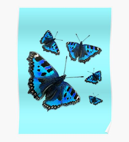Admiral Butterfly #1 BLUE Poster
