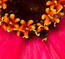 Flowers Within The Flower - Macro  by Sandra Foster
