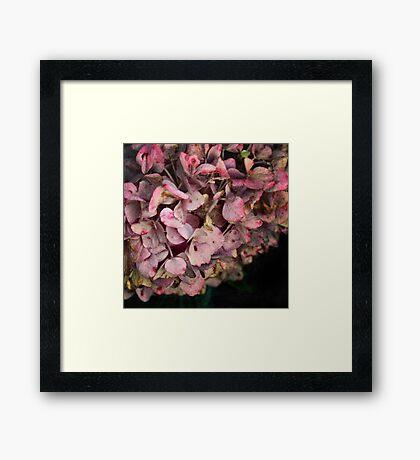 Textured fall Hydrangea Framed Print