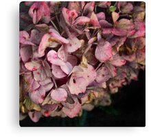 Textured fall Hydrangea Canvas Print