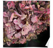 Textured fall Hydrangea Poster