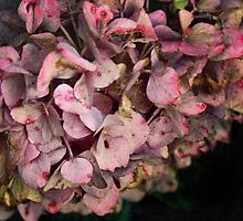 Textured fall Hydrangea by walstraasart