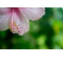 Pink Tropical Hibiscus Flower Photographic Print