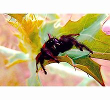My gimpy jumping spider  by Shellibean1162