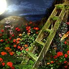 Night Garden by annewinkler1