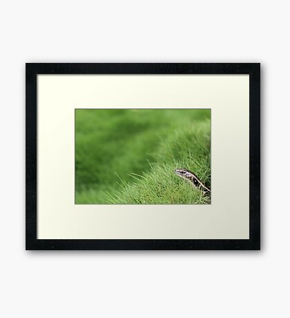 Lizard Pickaboo Framed Print