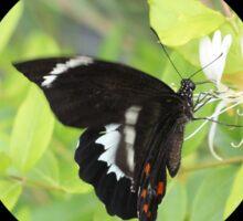 Beautiful Butterfly Wings Pattern Dress Sticker