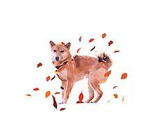 Autumn Shiba Photographic Print