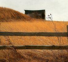A Golden Dream by Brian Gaynor