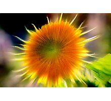 Dance to the Sun Photographic Print