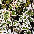 Raindrops on Roses and Frost on the Ivy by Bryan D. Spellman