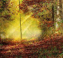 Woodland Trail by Barry  Jones