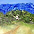 In the bushveld by Elizabeth Kendall