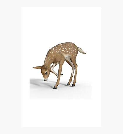Roe a Deer Photographic Print