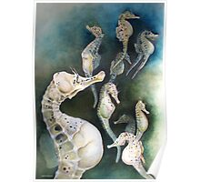 Potbellied Seahorses Poster
