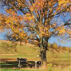 Enjoying The Autumn Shade by Lois  Bryan