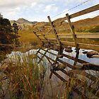 Reeds in Blea Tarn. by Billlee