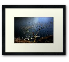 'Survival' Framed Print