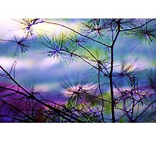 Glistening Needles Photographic Print