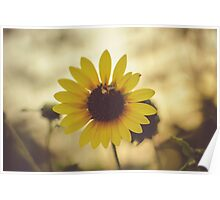 Sunflower with bee and blurred background Poster