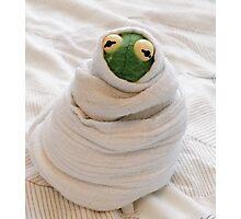 Snug Kermit Photographic Print
