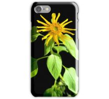 Sunflower Love iPhone Case/Skin