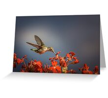 Colibri - My Summer Visitor Greeting Card