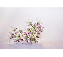 Cilantro flower Photographic Print