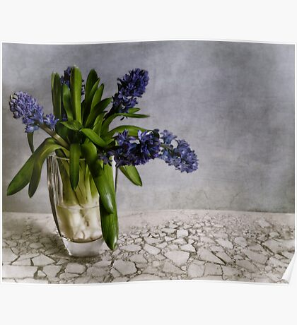 still life with hyacinth Poster