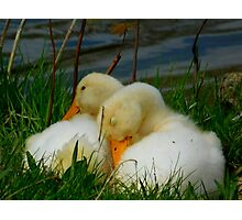 Sleeping Ducks Photographic Print
