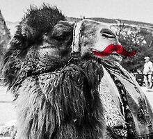 Moustache Camel by sorenhornum