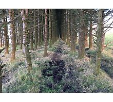 Beautiful Forest Print  Photographic Print