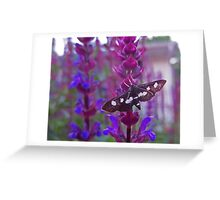 Black and White Butterfly on Salvia Greeting Card