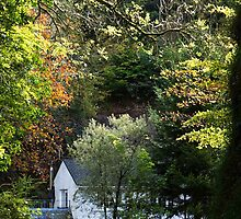 The Cottage at the end of the Lane by Country  Pursuits