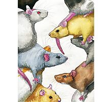Rat Stack Photographic Print