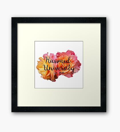 Harvard University Roses Framed Print