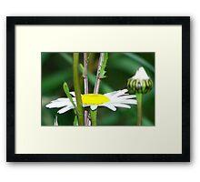 Wildflower Waipoura New Zealand Framed Print