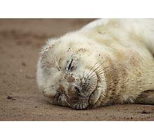 Baby Grey seal Photographic Print